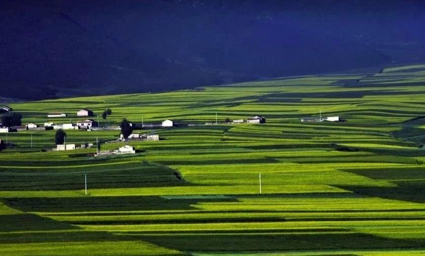 【农业政策资讯】中央财政助农业绿色发展,这才是未来农业发展方向!