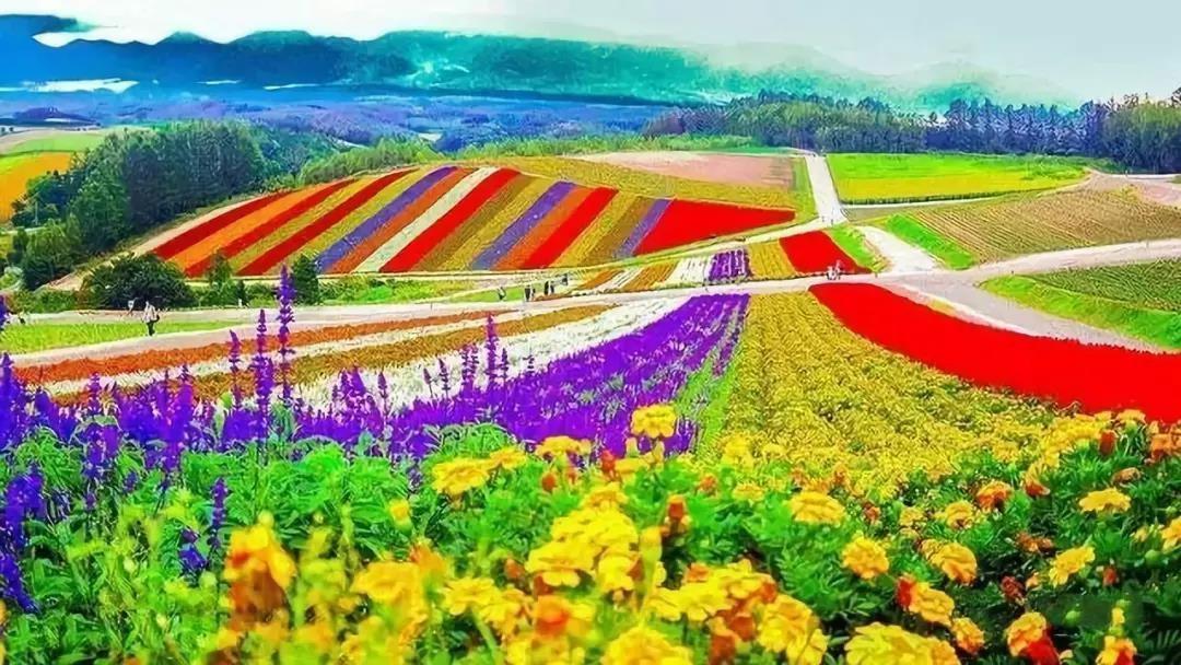"""【农业杂谈】日本 """"一村一品"""" 农业发展模式"""