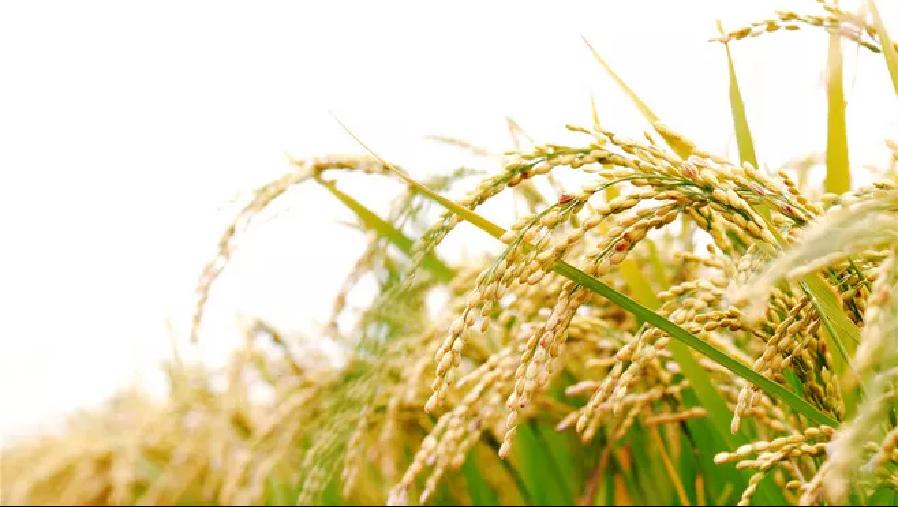 【展商风采回顾】深圳市共和农业5G精准种植技术惊艳绿博会