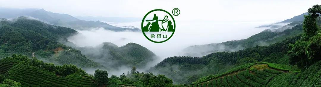 【每周优品】原始生态,自然有机——象棋山有机茶