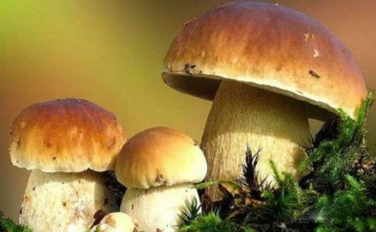 【每周优品】开创菌汤新时代,是野生菌调味品食材标杆品牌!