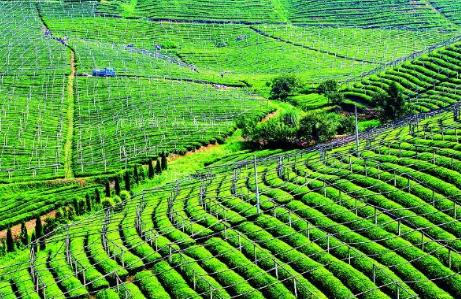 """常州大力推动生态循环种植:""""绿色灌溉""""为农产品添上""""绿色保险"""""""